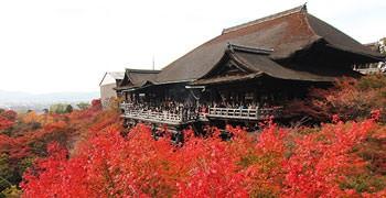 【京都旅遊】清水寺|秋末楓紅火燒清水舞台