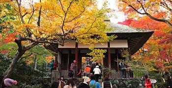 【京都旅遊】常寂光寺|被茂密紅葉覆蓋的感動