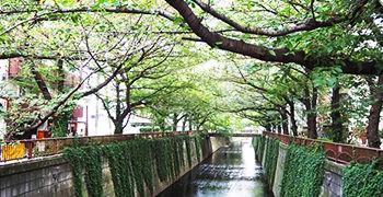 【東京旅遊】中目黑一日散步地圖|交通 購物 美食全攻略