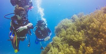 【菲律賓宿霧】去薄荷島潛水考照的3個理由