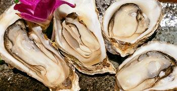 【札幌美食】Azumasi 牡蠣酒場|漁港直送生蠔一顆40元
