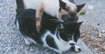 【沖繩景點】奧武島|貓島&中本天婦羅