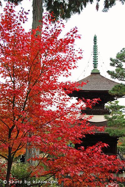 京都-嵐山-常寂光寺-楓葉-賞楓-紅葉-景點-推薦-旅行-旅遊-日本-景點