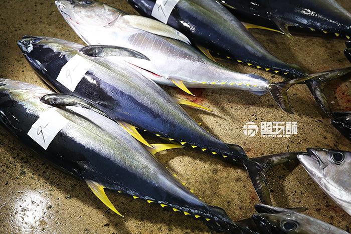 沖繩-石垣島-石垣-旅遊-旅行-自由行-景點-必買-戰利品-購物-土產-黑糖-泡盛-推薦-紅芋-公設市場-逛街-鮪魚-usio