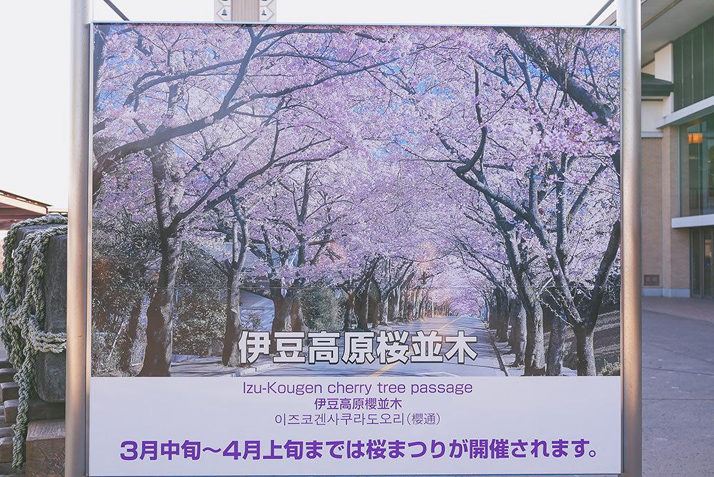 靜岡-伊豆-高原-大室山-纜車-伊東-八景-富士山-旅遊-旅行-自助-自由行-推薦-景點-鐵道-之旅